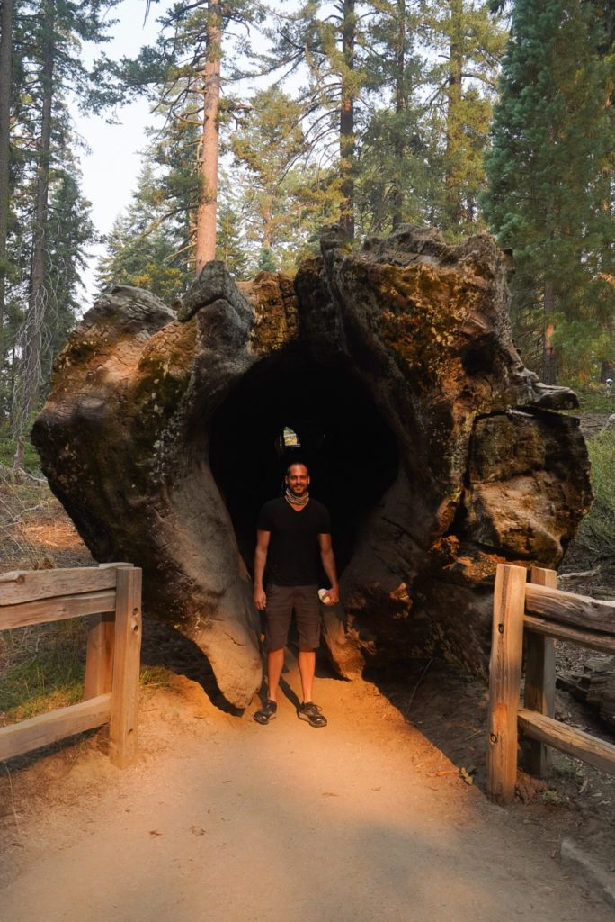man standing in hollowed out sequoia tree