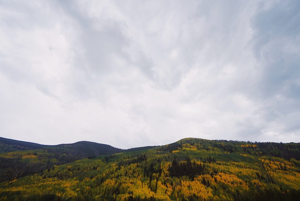 trees on mountains turning yellow