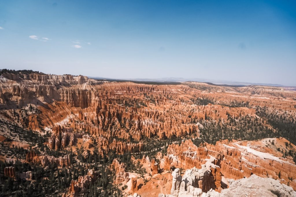 A picture of a canyon with pine treets