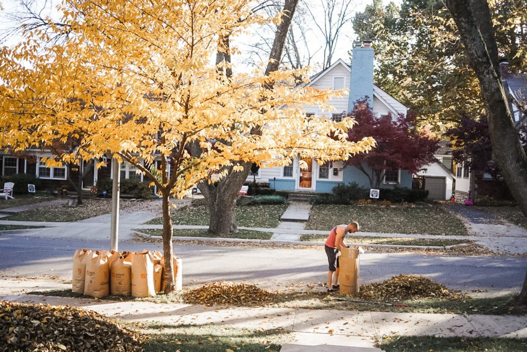 Front yard with piles of leaves. Man is placing leaves in a bag standing near a tree with yellow leaves.