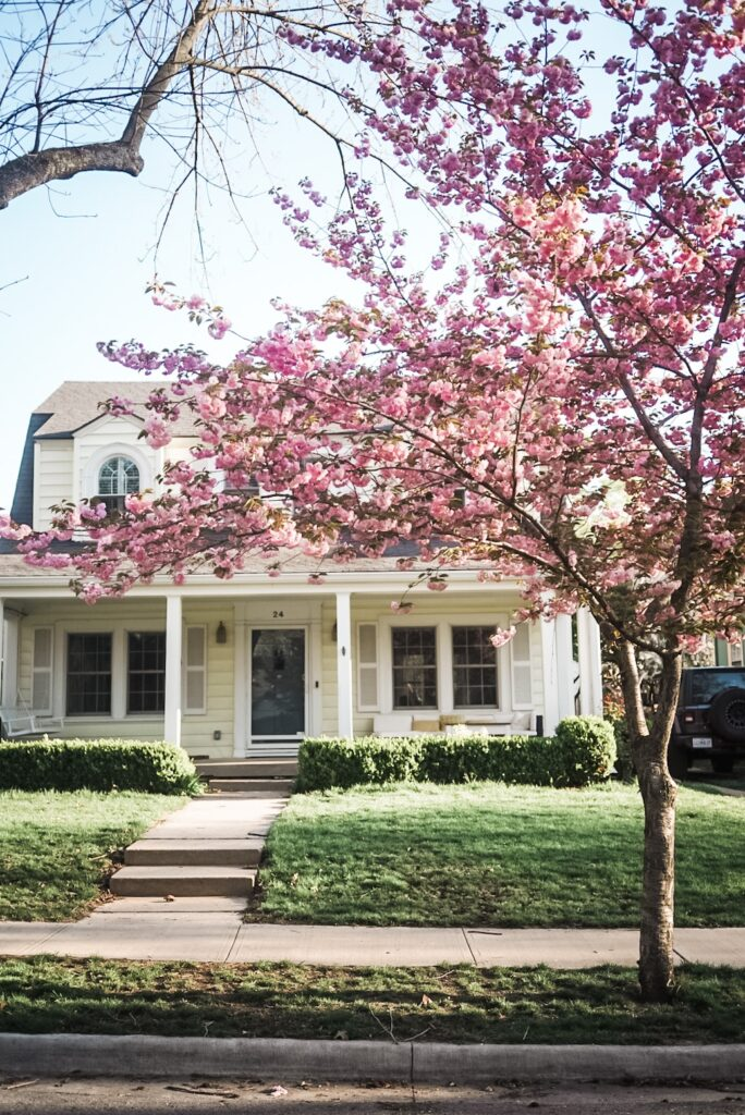 Yellow house with tree with pink blossoms